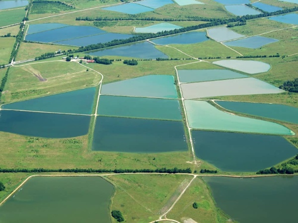 aquaculture pond liners